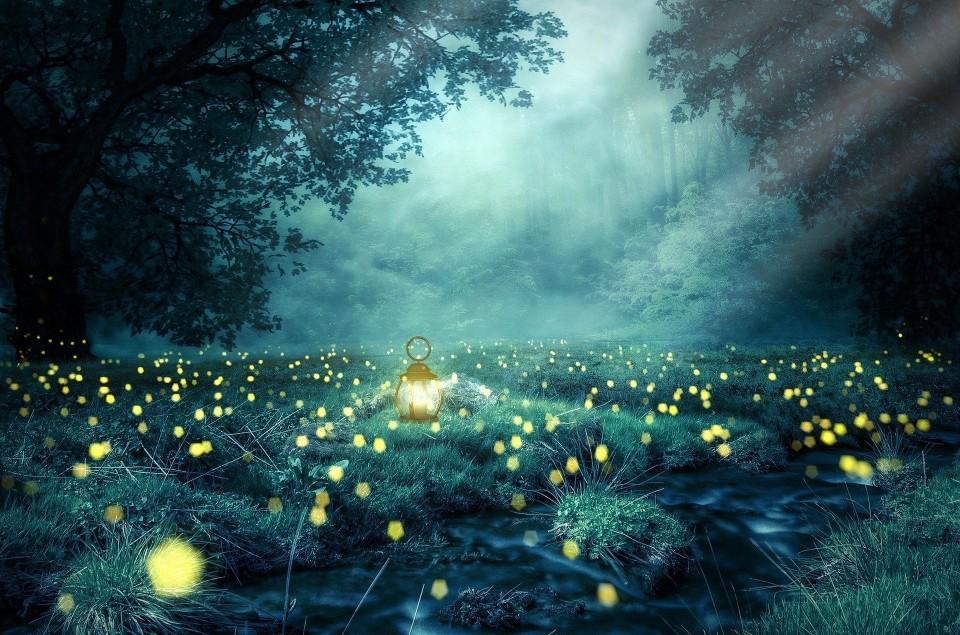 Glühwürmchen: wie sie leben und warum sie leuchten   WWF Blog
